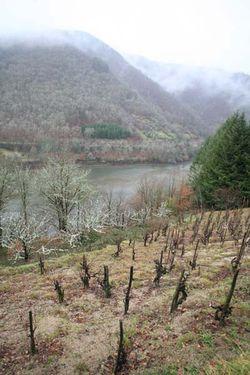 1nicolas_carmarans_vineyard_river_lebruel