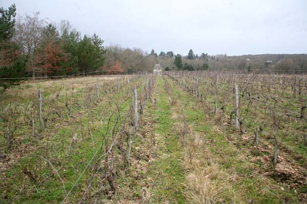 1puzelat_souchon_vineyard