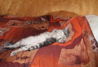 1olivier_lemasson_yurt_happy_cat