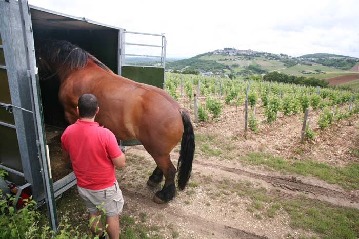 1sebastien_riffault_horse_backing_out_van