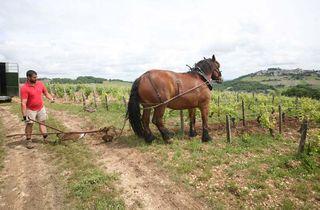 1sebastien_riffault_cheval_entrant