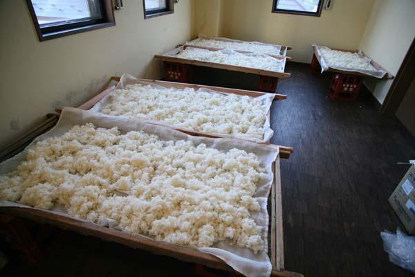 1daishichi_kojo_fermenting_rice