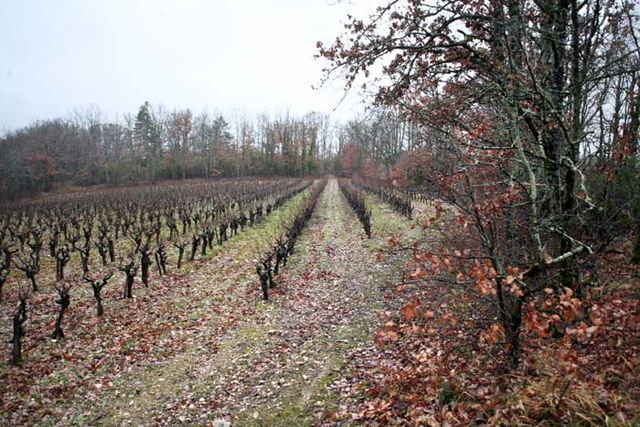 1causse_marines_vigne_bordure_bois
