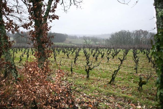 1causse_marines_vineyard_from_wooded_hedge