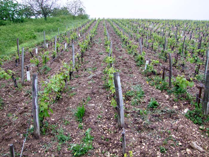 1de_moor_cote_de_l_etang_horse_plowed_vineyard