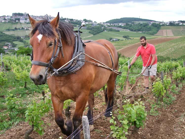 1sebastien_riffault_horse_plowing_sancerre