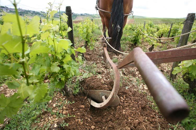 1sebastien_riffault_draft-horse_plowing_1st