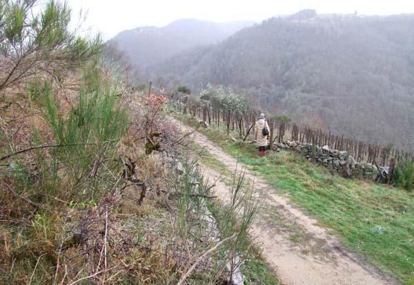 1nicolas_carmarans_aveyron_abandoned_vineyard