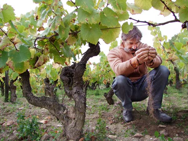 1jo_landron_on_old_vines