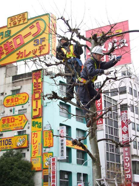 1tokyo_pruning