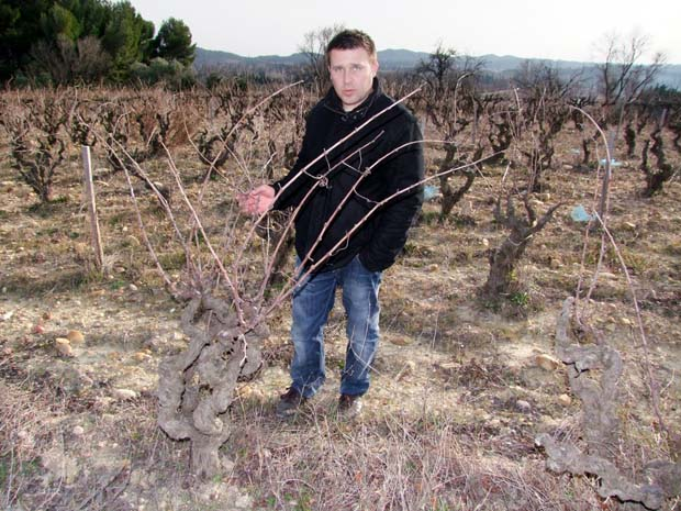 1nicolas_renaud_very_old_vine