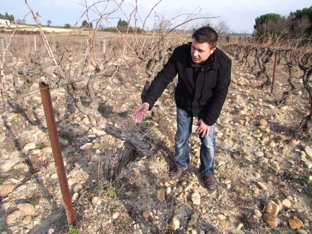 1nicolas_renaud_bourboulenc_planted_1912