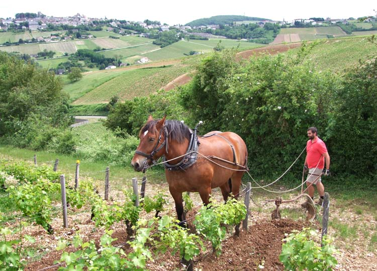 1sebastien_riffault_bas_auxinis_cheval_ophelie