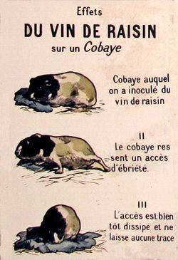 1cobaye_buvant_du_vin
