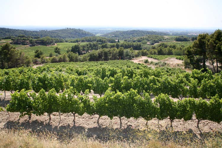1vacqueyras_coop_vineyards_vista_rhone