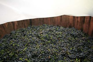 1chai_pacalet_carbonic_maceration_pinot_noir