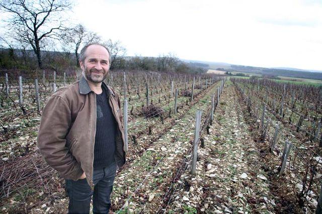 1francois_ecot_vigne_cailloux
