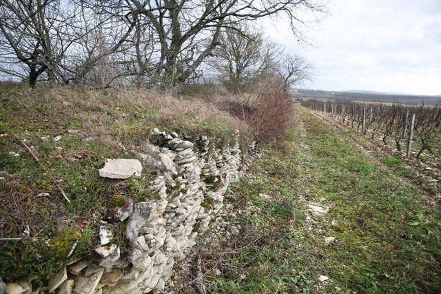 1francois_ecot_mur_pierre_long_vignes