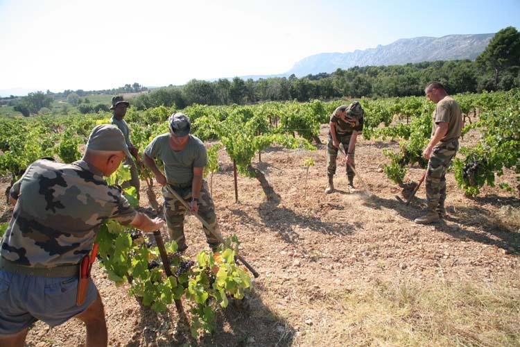 1legion_etrangere_soldats_travaillent_vigne