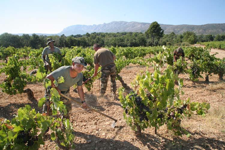 1legion_etrangere_legionaires_vineyard_work