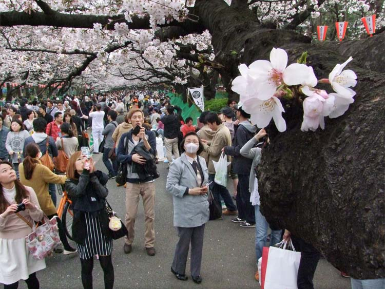 1hanami_smart-phone_photographers