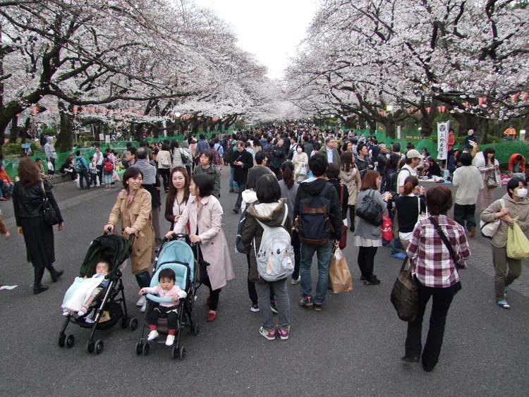 1hanami_main_alley_ueno_park_tokyo2013
