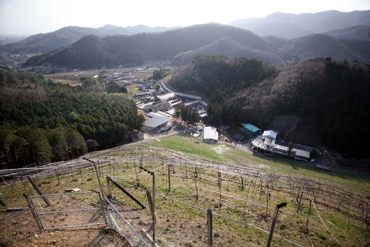 1Cocofarm_winery_vineyard_slope_mountains_japan