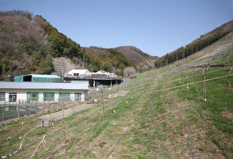1Cocofarm_vineyard_slope_japan