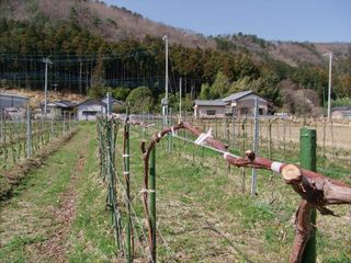 1Cocofarm_plot_in_ashikaga