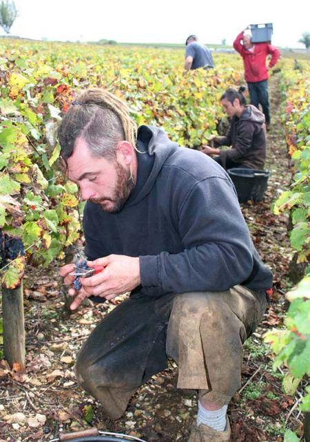 1pacalet__harvest_pommard_cueilleurs