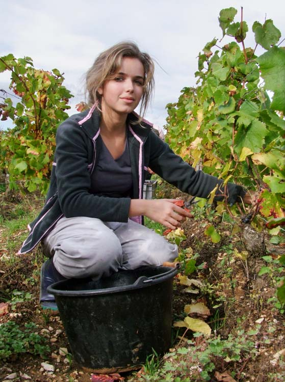 1pacalet__harvest_pommard_ania