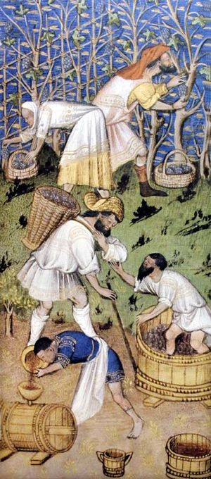 1wine_middle_ages_vendanges_grandes_heures_de_roban1430anjou
