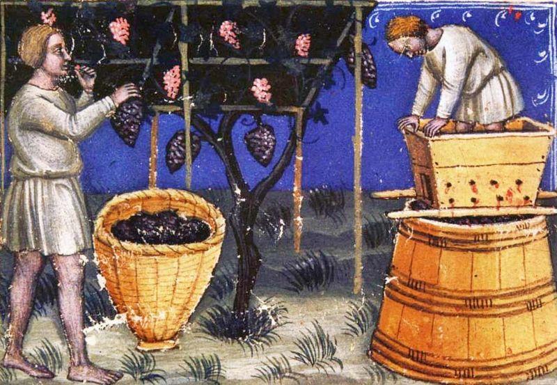 1wine_middle_ages_1385_pergola_training_crushing