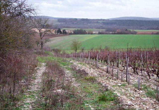 1francois_ecot_vignes_mailly-le-chateau