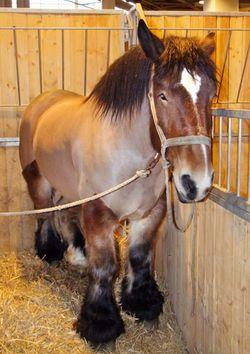 1salon_agriculture_draft_horse