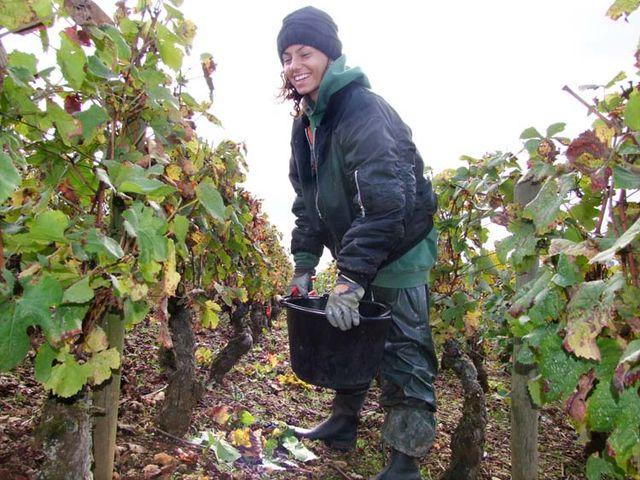 1pacalet__harvest_pommard_monica_italy