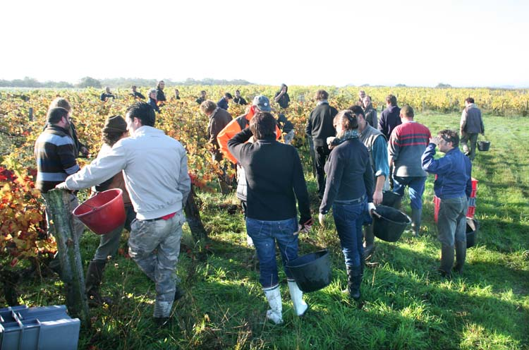 1solidarity_harvest_early_tuesday