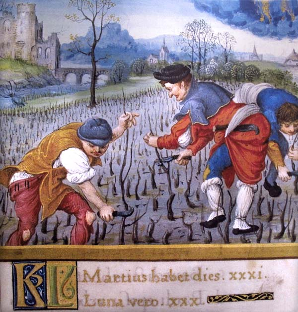 1wine_middle_ages_vineyard_work_early16th_century_loire