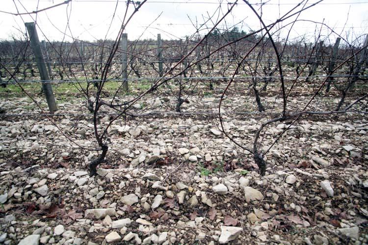 1francois_ecot_stony_soil_vneyard