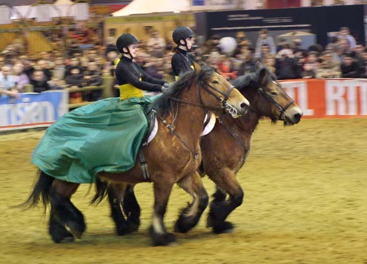 1salon_agriculture_farm_horse_show