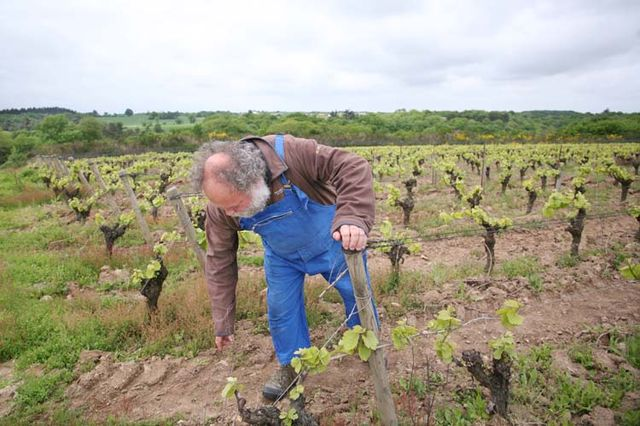 1muscadet_pepere_marc_ollivier_vines_may
