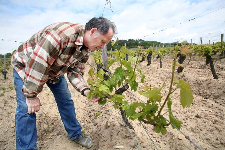 1pierre_breton_les_perrieres_vineyard