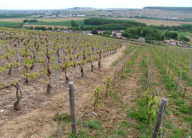 1georges_laval_former_organic_vineyard