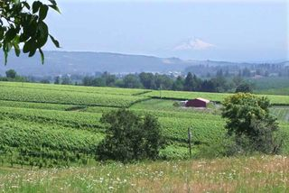 1Eyrie_oregon_mount_Hood_upon_vineyard