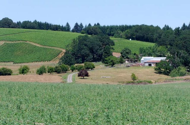1belle_pente_property_vineyards