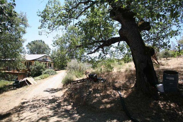 1la_clarine_house_tree