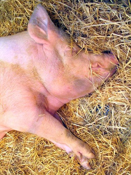 1pig_feet_at_sleep