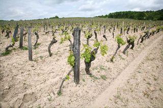 1les_perrieres_domaine_breton_vigne