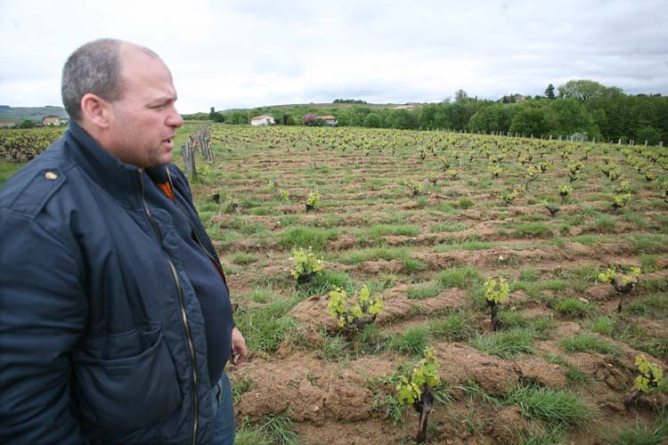 1georges_descombes_old_vines_missing