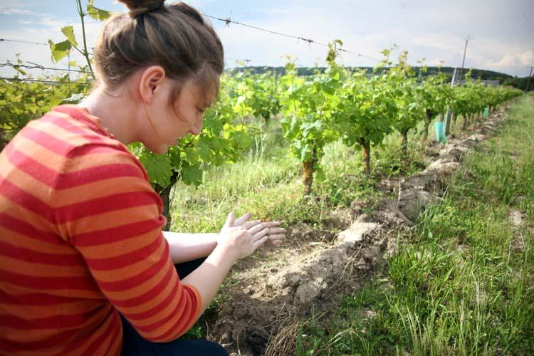 1helda_rabaut_sandy_soil_vineyard